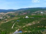 【来之不易的绿水青山】云南华坪:黑煤矿山变身芒果园
