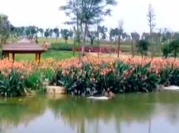 """【来之不易的绿水青山】广西 那考河:""""臭水沟""""变身湿地公园"""