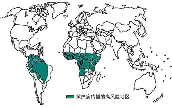 网络图片    浙江在线杭州2月8日讯(浙江在线编辑 周舸)据中新社报道,近期,巴西黄热病感染病例持续上升,并向巴西全国蔓延。   巴西卫生部2月6日发布报告称,巴西全国目前共发现疑似黄热病1006例,其中,751例在调查中,确诊180例,已有65人确诊死于黄热病,全国多个州都有病例报告。   面对越演越烈的黄热病疫情,巴西联邦、州和市级卫生行政部门已采取紧急措施应对疫情。未雨绸缪,这种目前只能抗注射疫苗来预防,且尚无特效疗法的传染病,会漂洋过海来中国吗?   传播历史悠久的黄热病   黄热病是由
