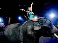 美国百年马戏团谢幕 社会变了,动物表演神奇不再